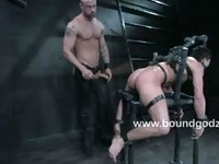 Top ties the newcomer up on horse chair